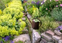 Создание пейзажных групп из лекарственных растений