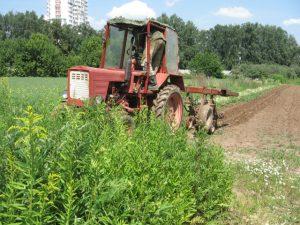 Междурядная обработка почвы